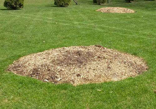 tree-stump-grinding-houston-3